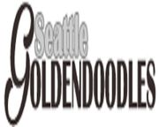 Seattle Goldendoodles Company - 12.10.19