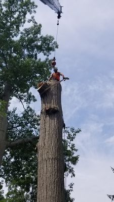 Tree Master Tree Care & Landscape Supply - 13.03.19