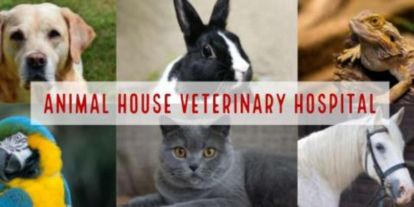 Animal House Veterinary Hospital - 16.07.18