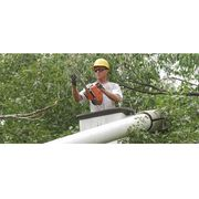 KC's Tree Care - 20.06.17