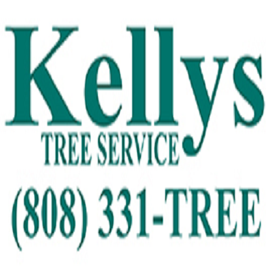 Kelly's Tree Service - 02.11.18