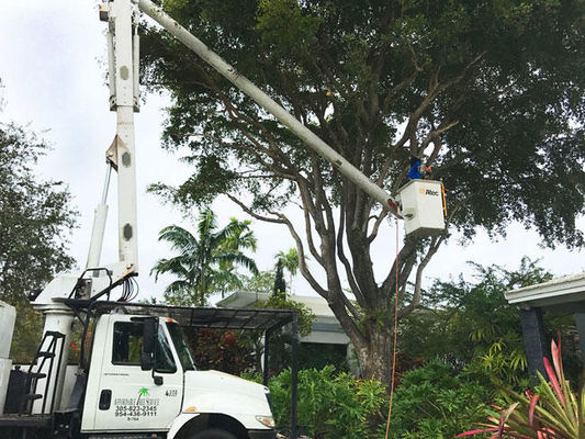 Affordable Tree Service Inc. - Tree Service Miami - 08.11.19