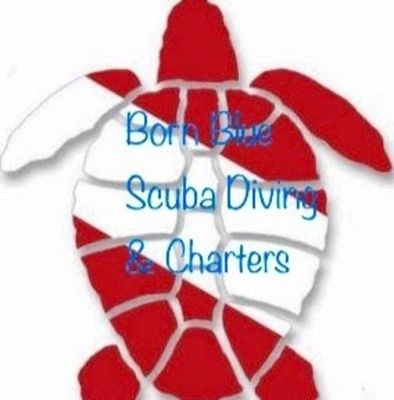 Born Blue diving & Charters - 02.11.18