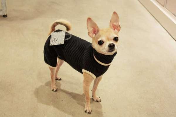 PuppyStar Boutique & Spa - 12.02.13