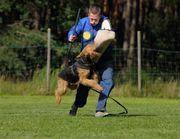I Teach Dogs - 17.07.17