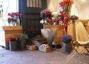 DONATI – Experten für Floristik und Garten - 12.12.15